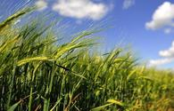 Joint EBRD-FAO study reveals bioenergy potential in Turkey