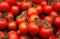 No problems observed in export of Azerbaijani tomatoes to Russia