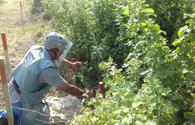 "ANAMA continues mine clearance in liberated Jojug Marjanli <span class=""color_red"">[PHOTO]</span>"
