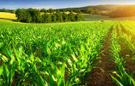 Azerbaijan, Israel discuss cooperation in agriculture