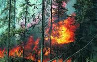 Whittier forest fire in California grows by 4 Times in 24 Hours