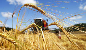 Turkmenistan receives orders for export of its agricultural products