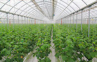 Korean company starts building hydroponic greens houses in northern Tajikistan