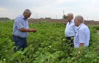 "Farmers in Yevlakh to benefit from expanding cotton business <span class=""color_red"">[PHOTO]</span>"