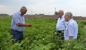 """Farmers in Yevlakh to benefit from expanding cotton business <span class=""""color_red"""">[PHOTO]</span>"""