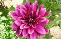 "Keep your garden looking colorful with autumn flowers <span class=""color_red"">[PHOTO]</span>"
