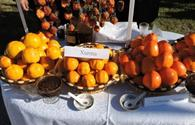 """Balakan becomes persimmon paradise this weekend <span class=""""color_red"""">[PHOTO]</span>"""