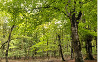 Interest in renting forest land increases in Azerbaijan