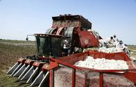 Cotton harvest reaches 200,000 tons this year