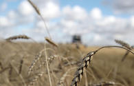 Kazakhstan to increase grain exports