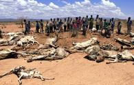 Preventing the next African famine