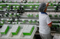 Chinese dairy company interested in Kyrgyzstan's market