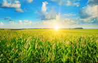 IFC: agricultural sector can play key role in boosting non-oil growth