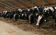 Azerbaijan's agriculture sector needs large cooperatives