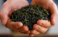 Azerbaijan imports more tea from Russia