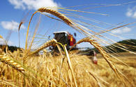 Country to continue enhancing agricultural infrastructure in 2020