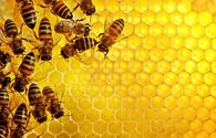 Azerbaijan to supply honey to Jordan
