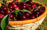Uzbekistan's sweet cherry exports hit $40 mln