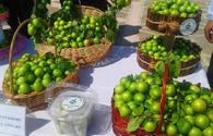 "Nakhchivan hosts cherry plum festival <span class=""color_red"">[PHOTO]</span>"