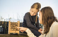 Learning to breed wild bees