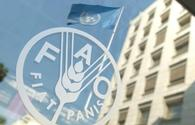 Iran, FAO cooperating to combat desertification