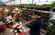 Iran's new flower export terminal nearly completed - official