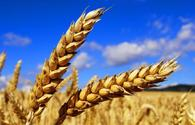 Kazakhstan increases grain exports by 1.6 times