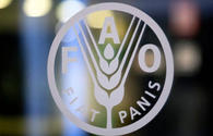 FAO, Azerbaijan working on new project in agricultural sphere