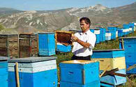 Azerbaijan Beekeepers Association talks beekeeping project in Jojug Marjanli