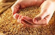 Azerbaijan eyes to fully provide itself with seeds of main grain crops