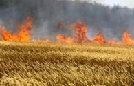 Azerbaijani farmers must understand damage of straw burning after harvest: expert