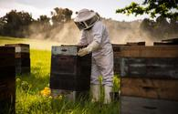 New project on beekeeping to be implemented among women