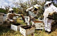 Government announces support for beekeepers