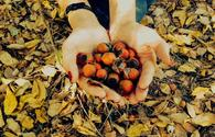 "Enjoy wonderful colors of autumn <span class=""color_red"">[PHOTO]</span>"
