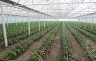"New greenhouses to appear in Azerbaijani with WB support <span class=""color_red"">[PHOTO]</span>"