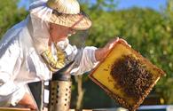 Azerbaijani beekeepers to receive subsidies from state