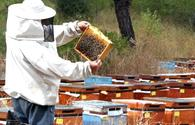 Beekeeping to receive additional impulse