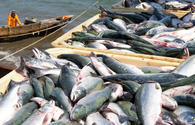 Malaysian company intends to create fish cluster in Uzbekistan