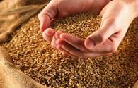 Tajikistan produces over 1.2 million tons of grain