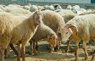 Iran now permits importing live animals