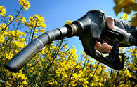 Biodiesel production to be launched in Azerbaijan