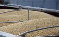 Kazakhstan, US to construct plant for production of non-GMO soybean seeds