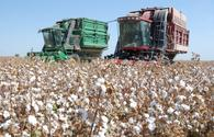 Turkmenistan boosts cotton harvest plan in 2020
