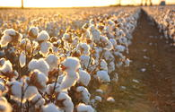 China to invest $ 300 million in cotton processing in Tajikistan