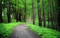 Azerbaijan to create industrial forests