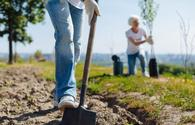 Tree planting campaigns in Baku to contribute to ecology