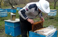 Azerbaijani beekeepers to receive subsidies worth about 1M manats
