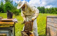 Beekeeping farms to receive subsidies