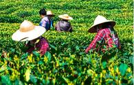 Iran, Sri Lanka negotiate tea trade