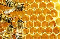 Beekeepers to receive additional supported
